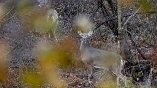 Deer Rifle Season