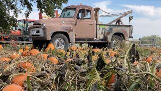 helena pumpkin patch.JPG