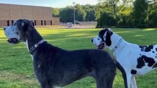 Pets die in cross country tranport
