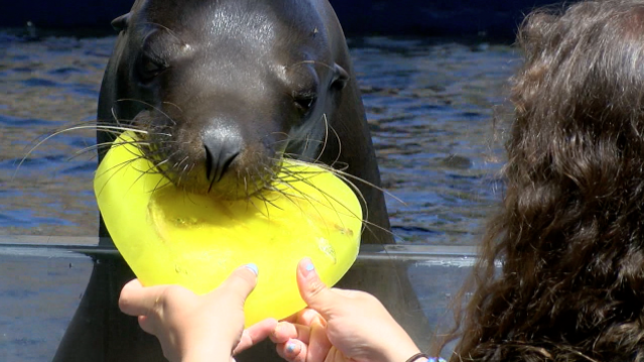 Wildlife World Zoo animals enjoy frozen treats!