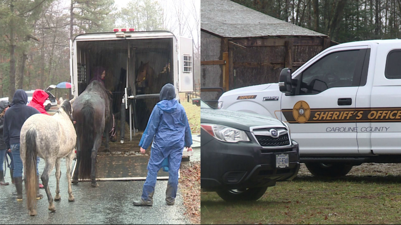 33 horses seized in animal cruelty investigation: 'Show me the abuse'