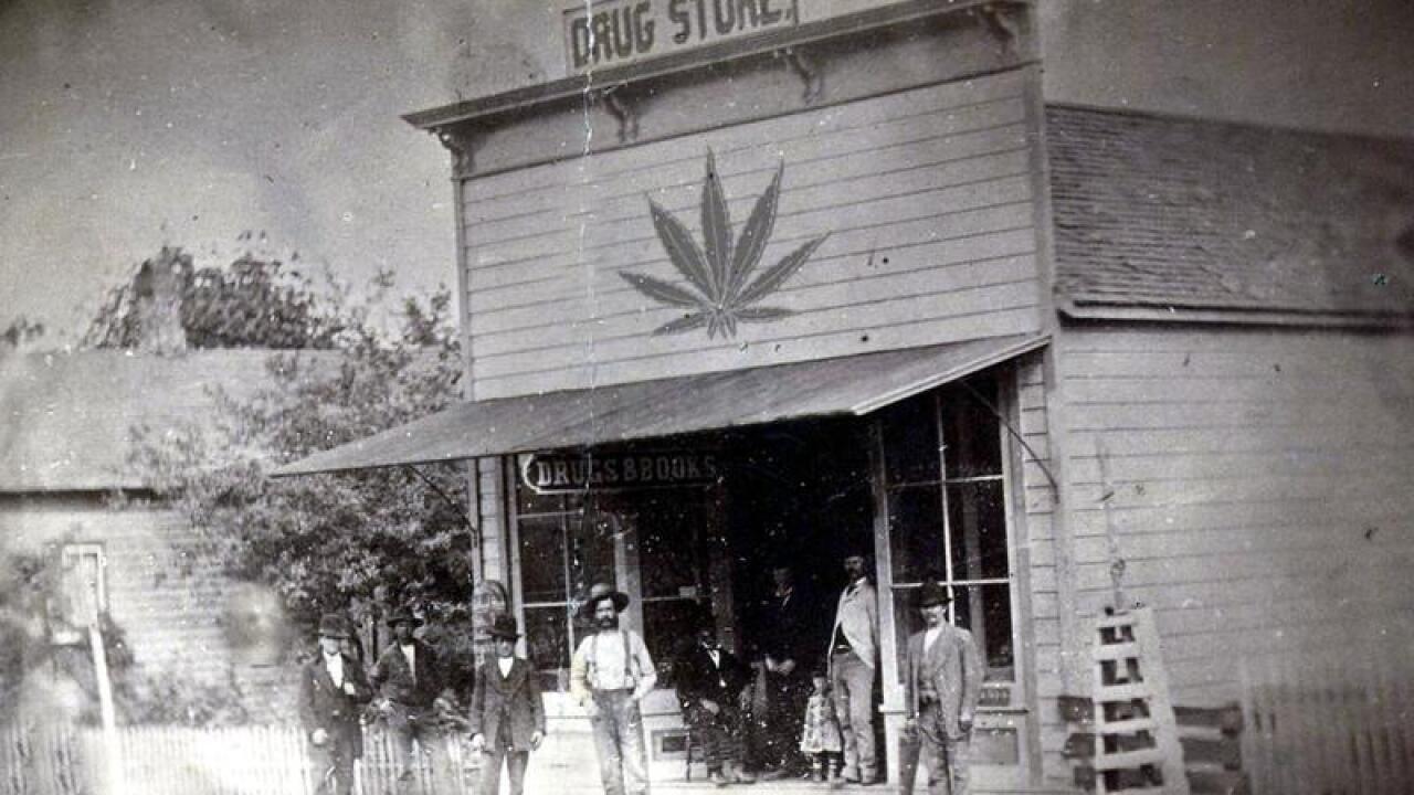 marijuana leaf drug store.jpg