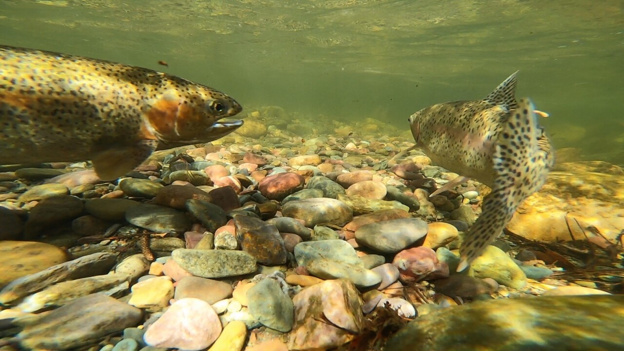 Anglers encouraged to watch for tagged trout as part of new research project