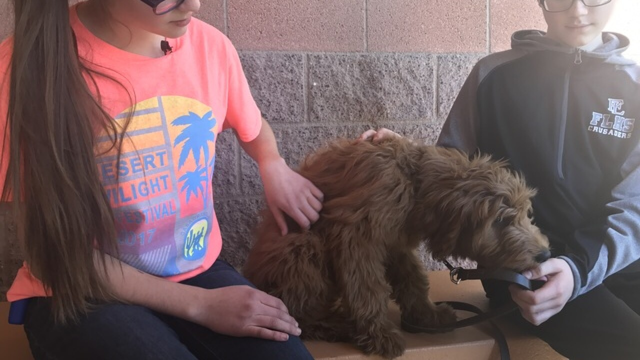 Faith Lutheran's adorable soon-to-be therapy dog