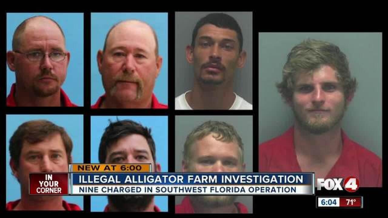 9 arrested in alligator poaching investigation