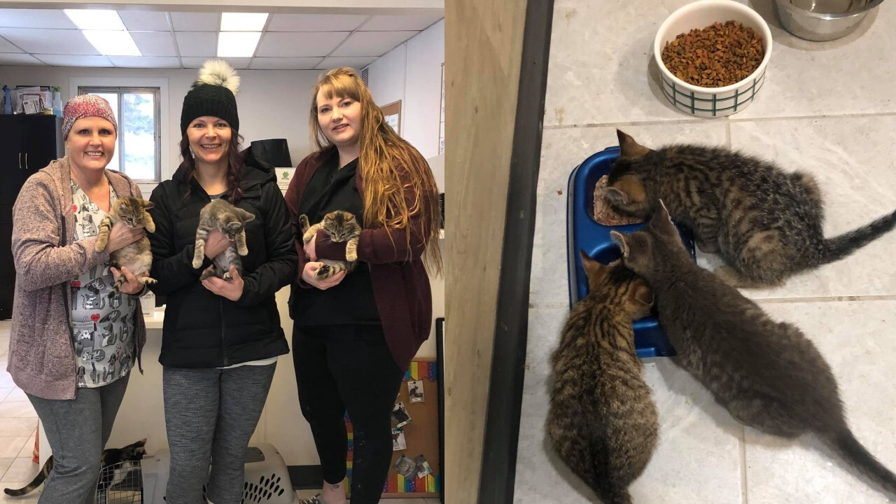 Oil worker uses his coffee to rescue kittens found frozen to the ground