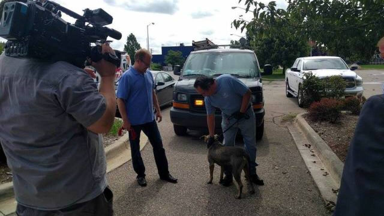 Dog rescued after being dumped on the road