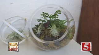 Build Your Own Custom Terrarium at Lawrence & Clarke Cacti Co