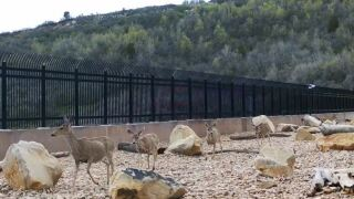 Wild animals of all kinds using the wildlife overpass that crosses I-80 at Parleys Summit