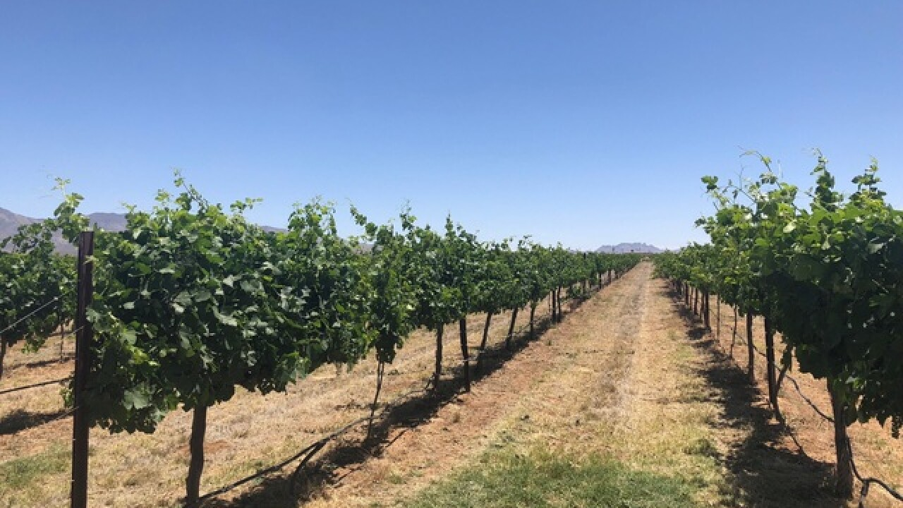 Grant awarded to help Willcox wine industry
