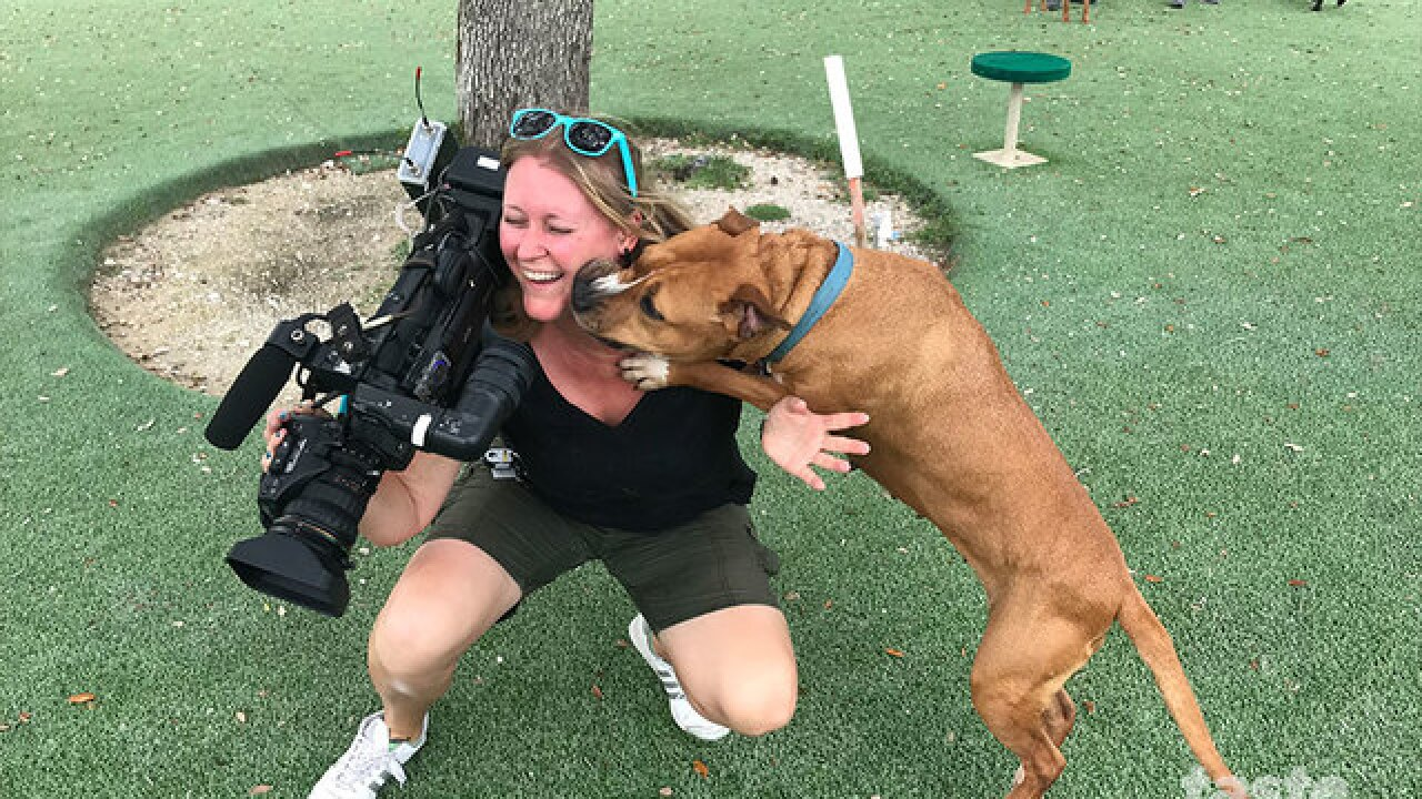 Kenny Chesney dogs ready for adoption at Big Dog Ranch Rescue
