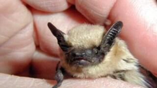 Rabid bat found in MuskegonCounty