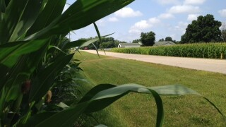 Michigan corn crop in jeopardy if Mother Nature doesn'tcooperate