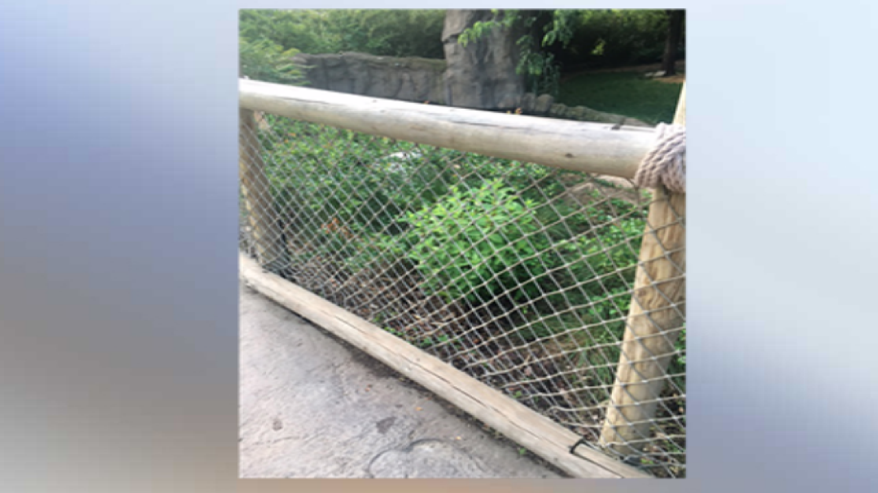 Zoo builds larger barrier at Gorilla World