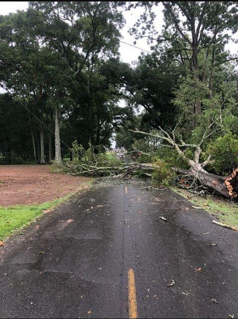 Tree down on Fontelieu Rd. Courtesy of Brandon Menard.
