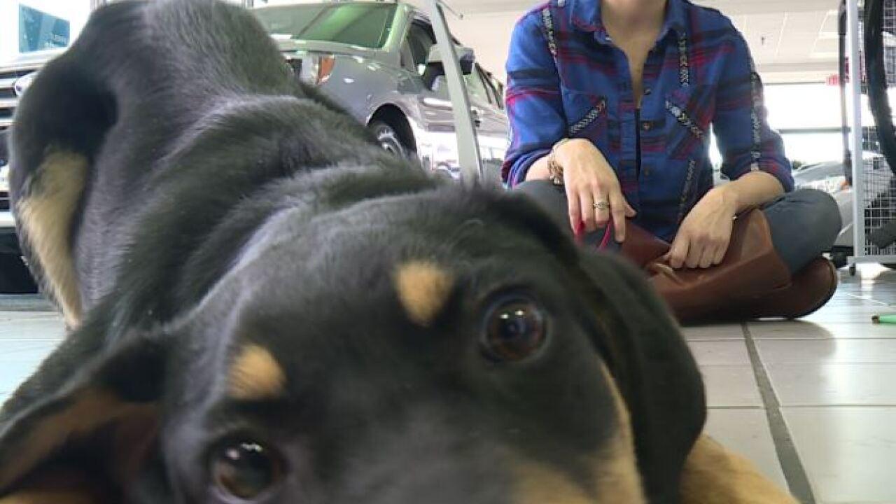 Dealership teams up with Richmond Animal League for BlackFur-Day