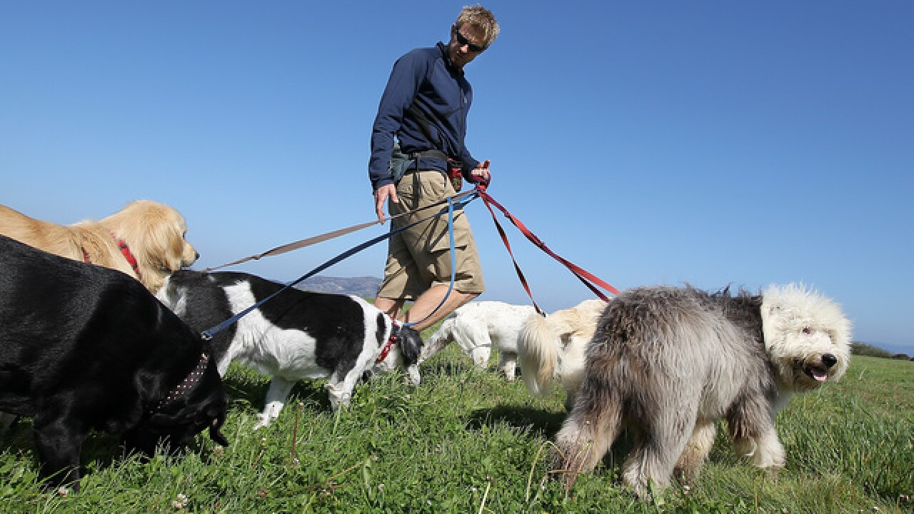 New law gives ease to dog sitters using online services