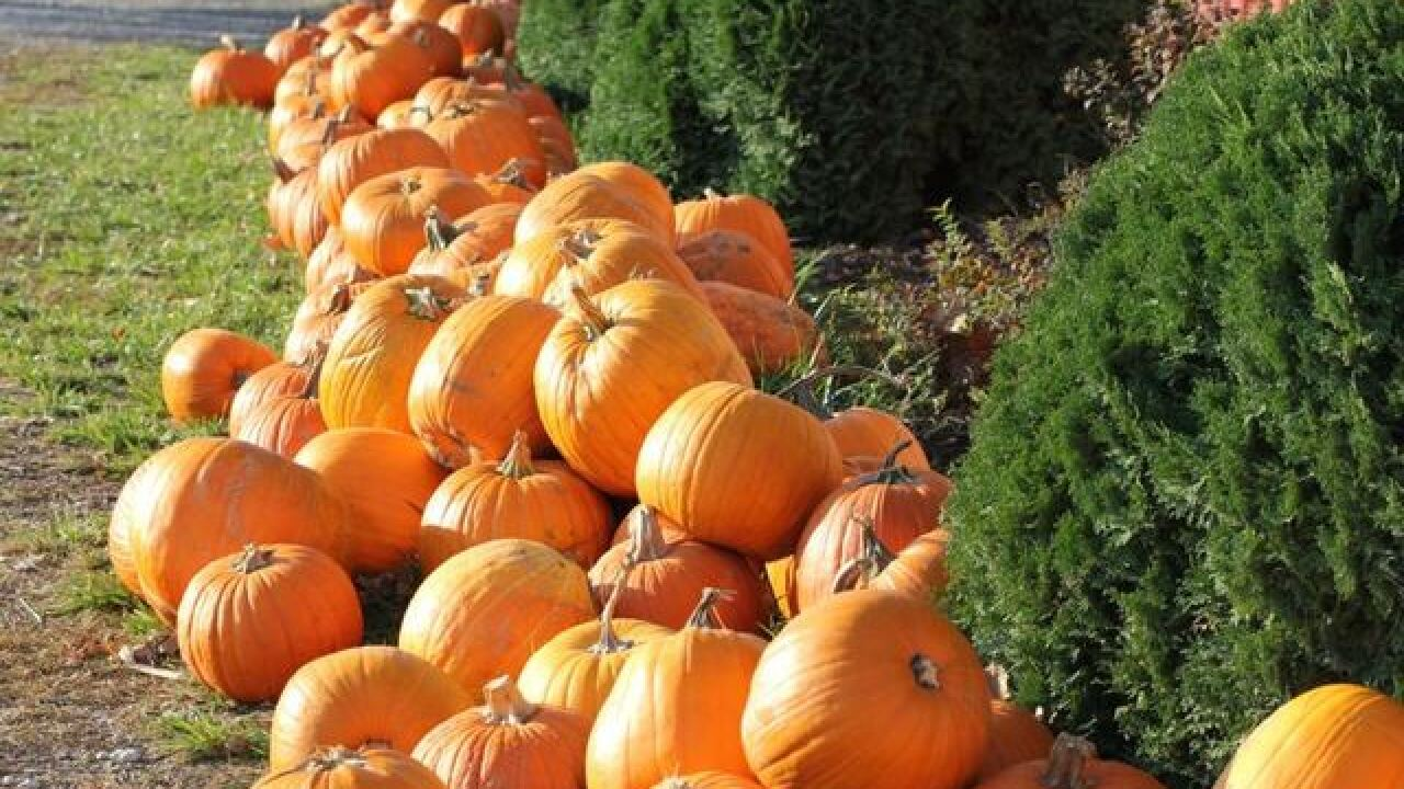 Reader's Digest names best pumpkin patches in Missouri, Kansas