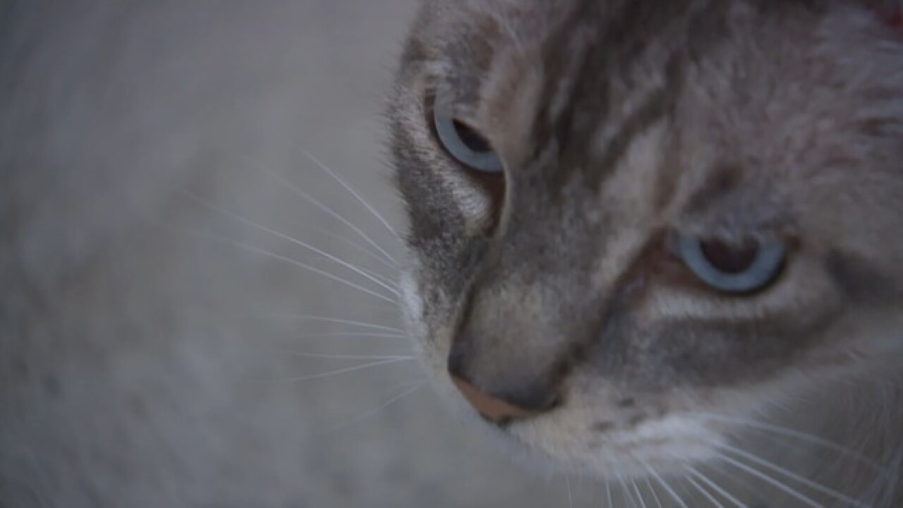 Cat beaten, suspect still on the loose