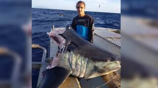 A huge shark caught by an Australian fisherman was half-devoured by an even bigger predator.