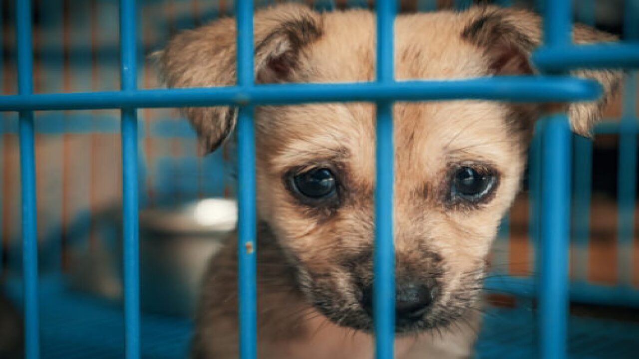 New York May Ban Animal Sales In Pet Stores