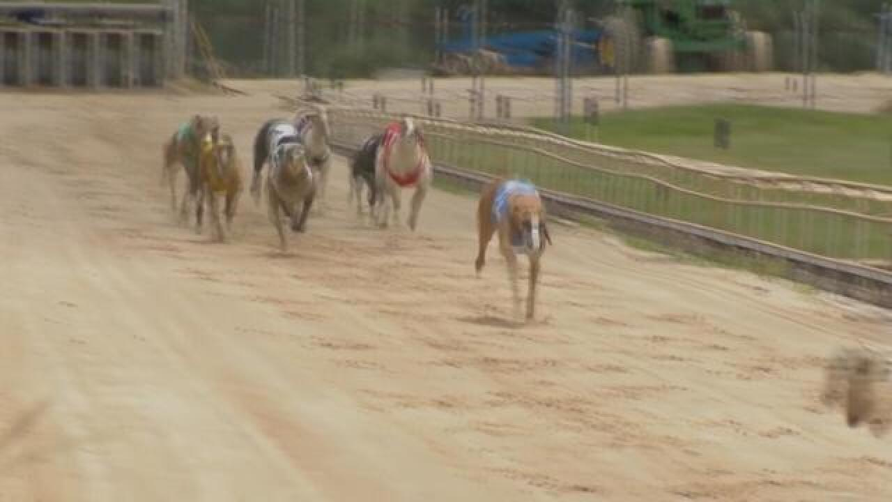 Florida votes to end Greyhound races