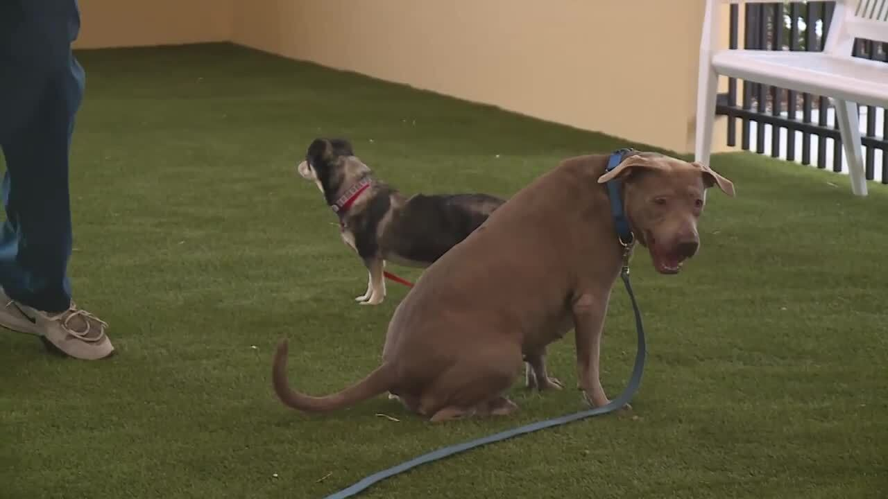 dogs on leashes at new Peggy Adams Animal Rescue League pet adoption center play yard