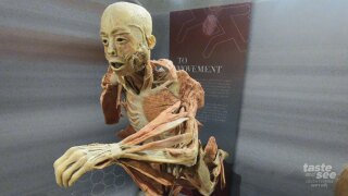 Real Bodies: The Exhibition at the South Florida Science Center and Aquarium