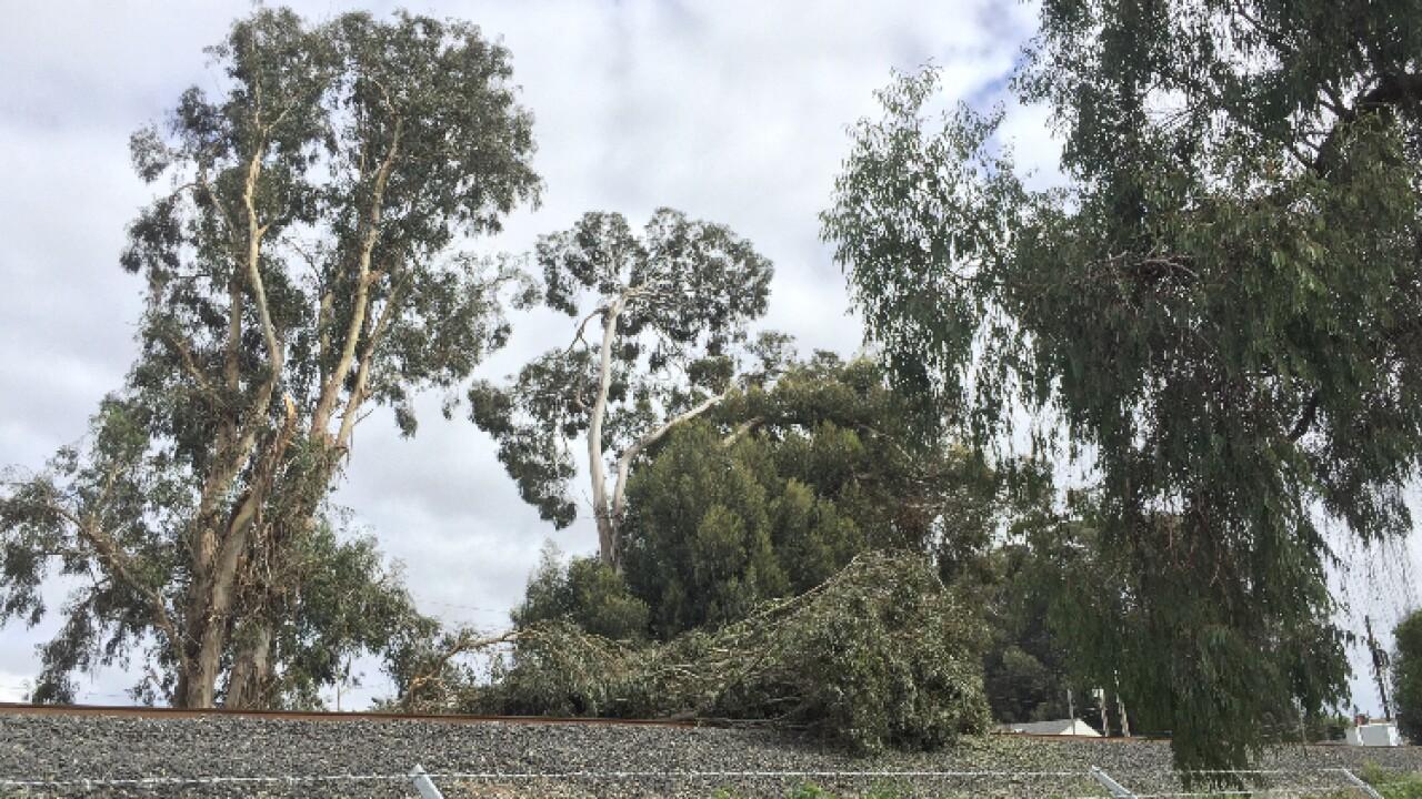 Tree on tracks 1.jpg
