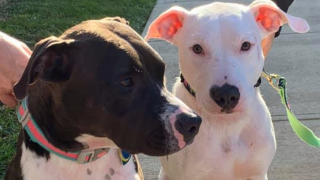 Lake County rescue puppies
