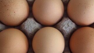 Recalled eggs linked to salmonella cases in seven states
