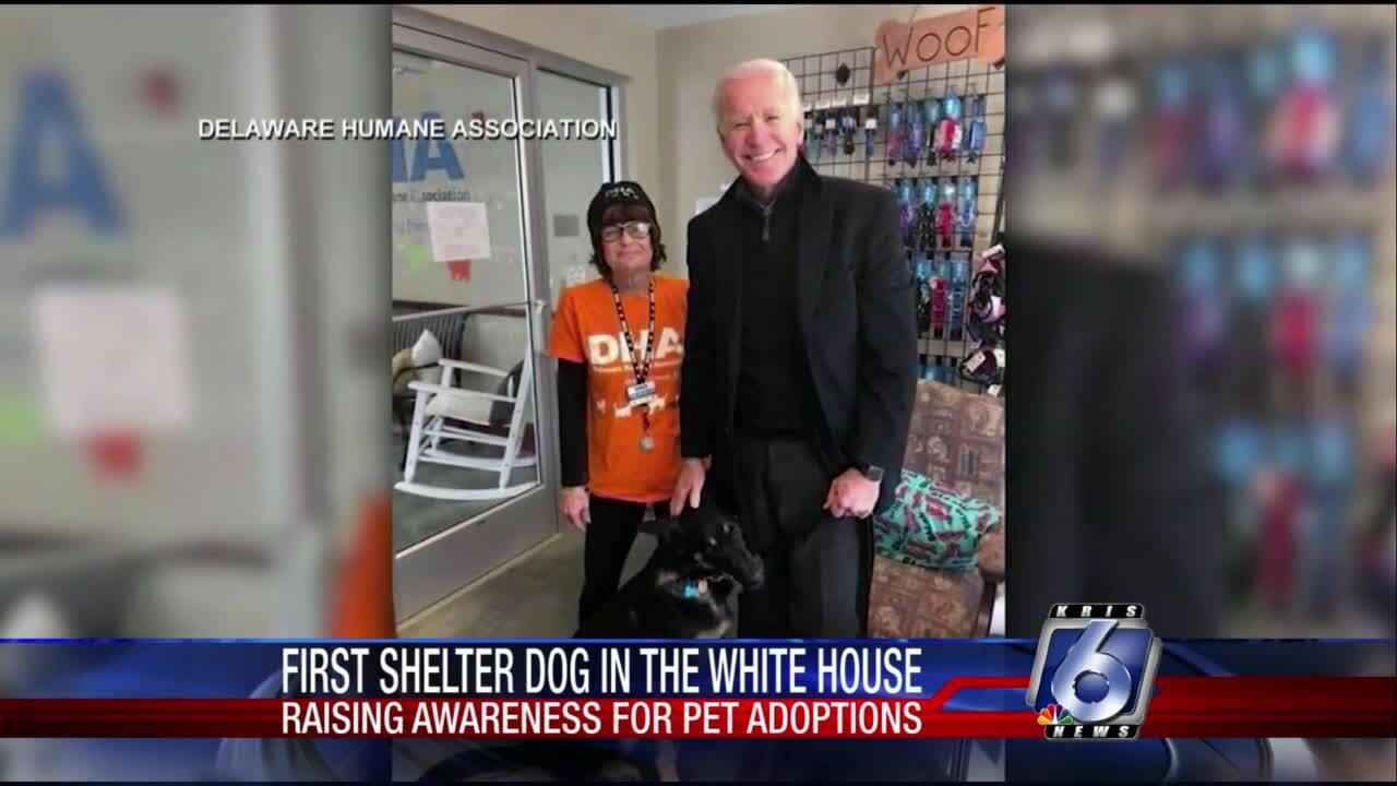 Joe Biden and his rescue dog, Major