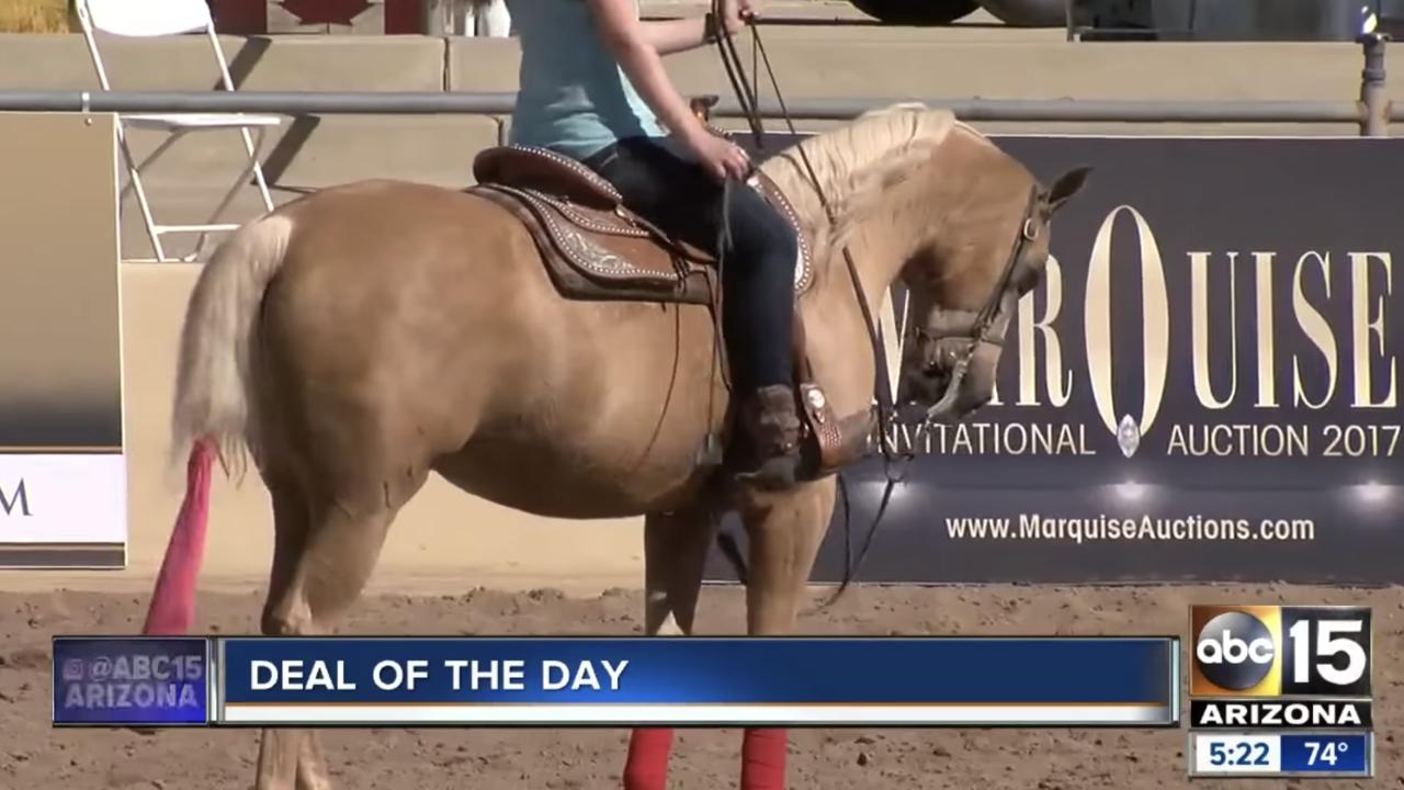 Scottsdale_Arabian_horse_show