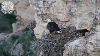 KNXV Lake Pleasant Bald Eagle Camera 2018.png