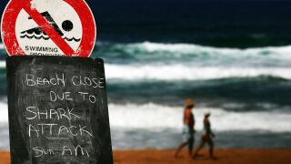 Three unprovoked shark attacks reported in the Carolinas in recent weeks