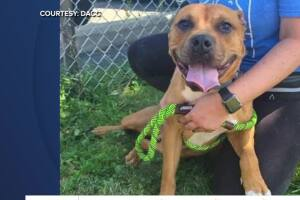 Detroit shelter offering reduced adoption fees to limit overcrowding