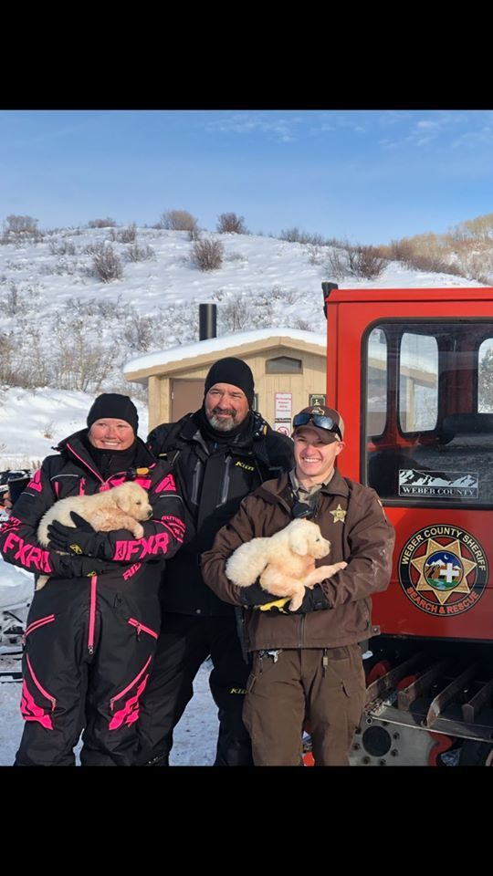 Photos: Four Great Pyrenees puppies rescued in remote area of Weber County