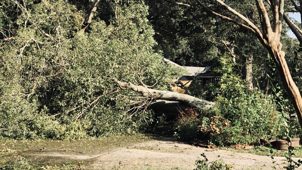 Delta Damage Lafayette