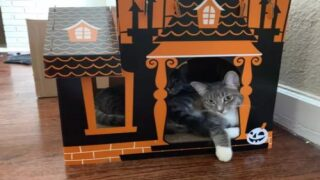 You Can Buy A Mini Haunted House For Your Cat This Halloween