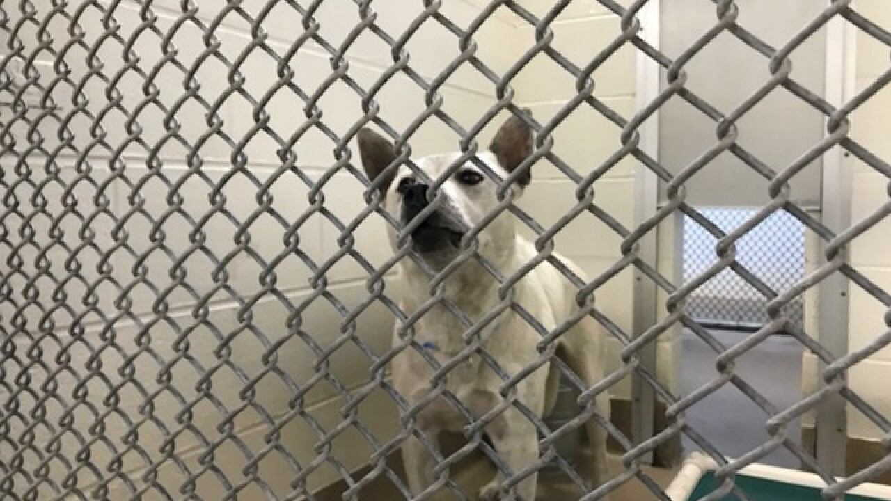 Dog used by Colorado couple in sex acts deemed unadoptable, euthanized Tuesday