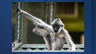 Leilani Gibbon.jpg