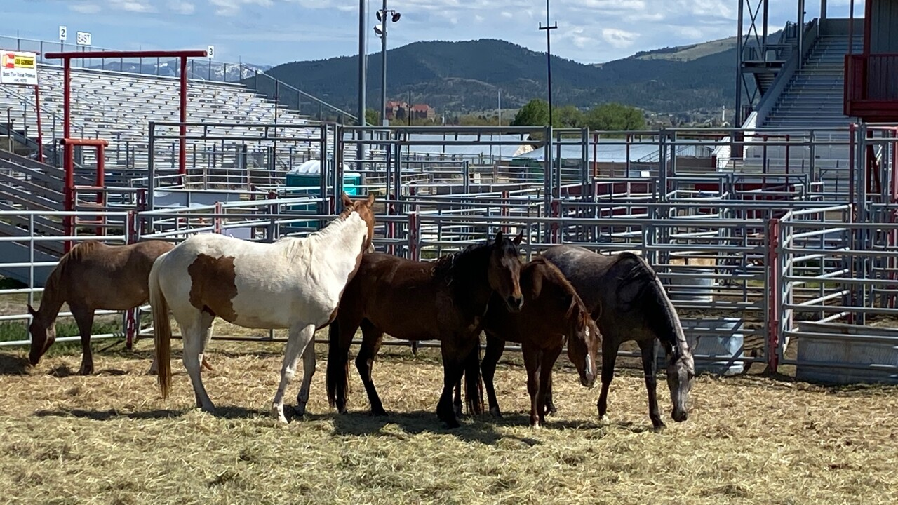 Horses are being kept at Lewis & Clark Fairgrounds as investigation continues