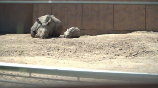 Baby Rhino at Zoo