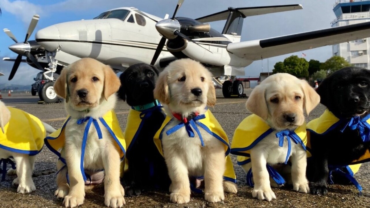 7 future assistance dogs get private flight with volunteer pilot