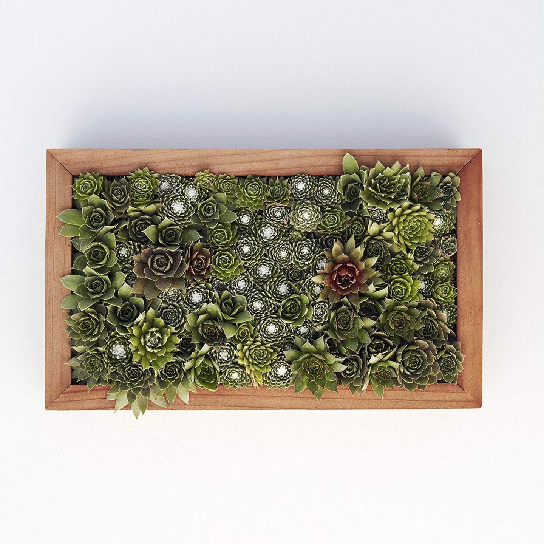 Succulent Living Wall Planter Kit.jpg