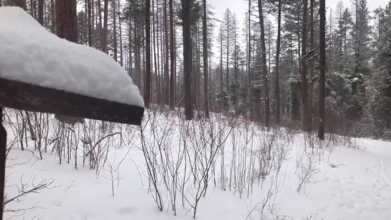 Missoula Snow