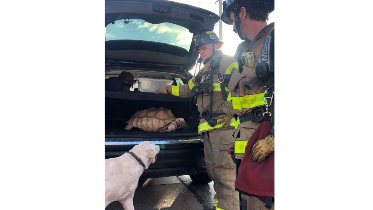 SLCFD Animal Rescue