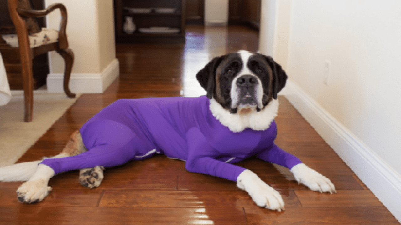 Shed Defender Dog Leotards Are Not Only Adorable—they Solve A Problem That Plagues Dog Owners