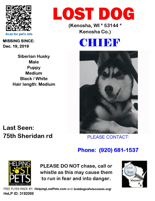 1912 Chief Sib Husky Puppy.png