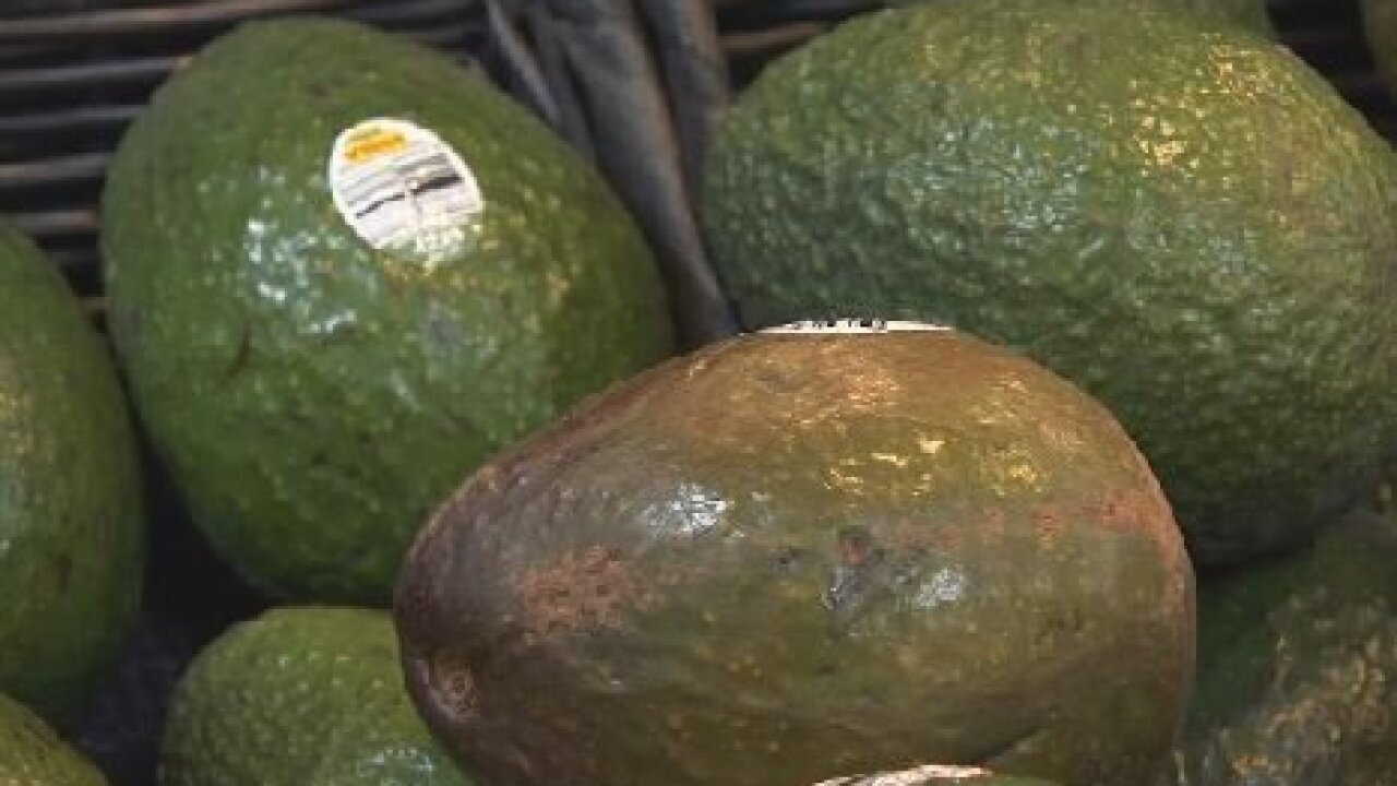 Avocado prices on the rise